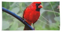 Northern Male Red Cardinal Bird Beach Towel by Peggy Franz