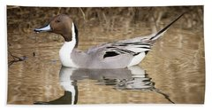 Northern Pintail Drake Beach Towel