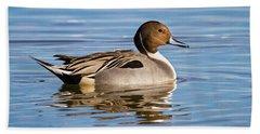 Northern Pintail Duck Beach Towel