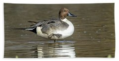 Northern Pintail Duck Beach Towel by Tam Ryan