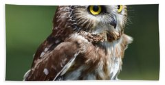 Northern Saw Whet Owl Beach Towel