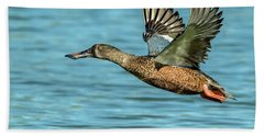 Northern Shoveler 6351-100217-2cr Beach Towel