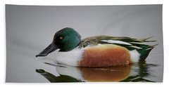 Northern Shoveler Beach Sheet