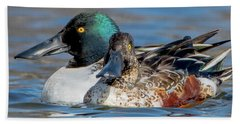 Northern Shoveler Pair Close-up Beach Towel by Jeff at JSJ Photography