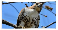 Not Polite To Stare Beach Towel by Kathy Eickenberg
