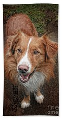 Nova Scotia Duck Tolling Retriever Beach Towel