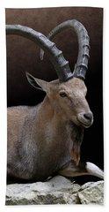 Nubian Ibex Portrait Beach Towel