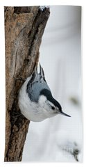Nuthatch And Spring Snow - D010349 Beach Sheet