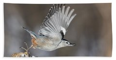 Beach Towel featuring the photograph Nuthatch In Action by Mircea Costina Photography