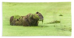 Beach Towel featuring the photograph Nutria In A Pesto Sauce by Robert Frederick