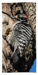 Nuttall's Woodpecker Beach Towel
