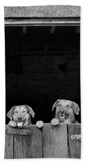 Nz Huntaways, Forever Happy And Nosey. Working Sheep Dogs Beach Towel