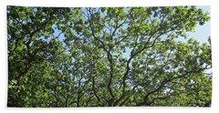 Oaks In The Noordhollandse Duinreservaat Beach Sheet