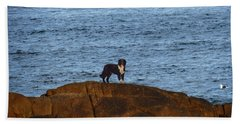 Ocean Dog Beach Towel