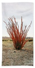 Ocotillo Plant Beach Sheet