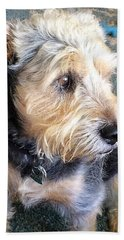 Old Dogs Rock Beach Towel