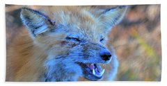 Beach Sheet featuring the photograph Old Fox by Debbie Stahre