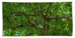 Old Linden Tree. Beach Towel by Ulrich Burkhalter