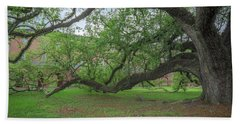Old Oak Tree Beach Towel