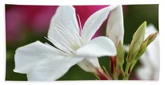 Beach Towel featuring the photograph Oleander Casablanca 2 by Wilhelm Hufnagl
