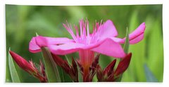 Beach Towel featuring the photograph Oleander Professor Parlatore 1 by Wilhelm Hufnagl