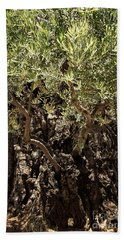 Beach Towel featuring the photograph Olive Tree by Mae Wertz