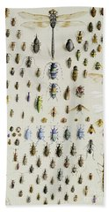 One Hundred And Fifty Insects, Dominated At The Top By A Large Dragonfly Beach Sheet by Marian Ellis Rowan