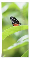 Beach Towel featuring the photograph Orange Black Butterfly by Raphael Lopez