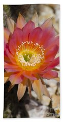 Orange Cactus Flower Beach Sheet