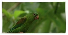 Orange-chinned Parakeet  Beach Towel
