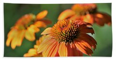 Orange Cone Flowers In Morning Light Beach Sheet