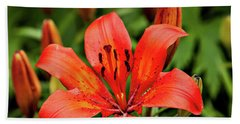 Beach Towel featuring the photograph Orange Day Lilly Single by Mary Jo Allen