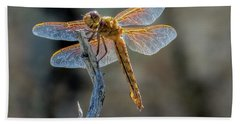 Dragonfly 6 Beach Towel