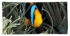 Orange-fin Anemone Beach Towel
