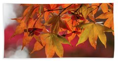 Beach Towel featuring the photograph Orange Maple Leaves by Clare Bambers