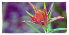 Orange Paintbrush Flower Beach Towel