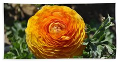 Orange Ranunculus Beach Towel