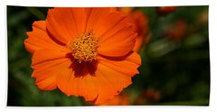 Orange Sulfur Cosmos Flower Beach Towel
