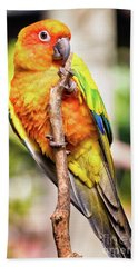 Orange Yellow Parakeet Beach Sheet by Stephanie Hayes