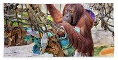 Orangutan In Rope Net Beach Towel by Stephanie Hayes
