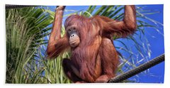 Orangutan On Ropes Beach Towel by Stephanie Hayes