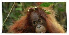 Orangutan Pongo Pygmaeus Baby, Camp Beach Sheet by Thomas Marent