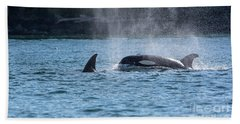 Orca Blowing Beach Sheet