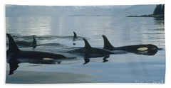 Beach Towel featuring the photograph Orca Pod Johnstone Strait Canada by Flip Nicklin