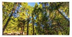 Beach Towel featuring the photograph Oregon Trees by Jonny D