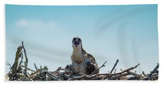 Osprey Chick Smiles For The Camera Beach Sheet by Jeff at JSJ Photography