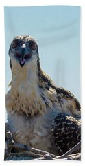 Osprey Chick Smiles For The Camera Macro Beach Sheet by Jeff at JSJ Photography