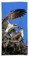 Osprey Chicks Ready To Fledge Beach Sheet