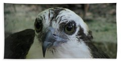 Osprey Portrait Beach Sheet