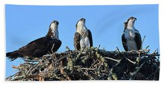 Osprey Family Beach Towel